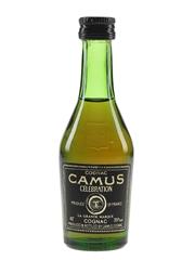 Camus Celebration