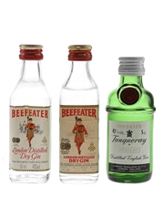Beefeater & Tanqueray