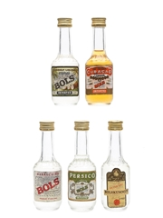 Bols Liqueurs Coconut, Curacao Dry Orange, Kummel, Maraschino, Persico 5 x 3.5cl-5cl